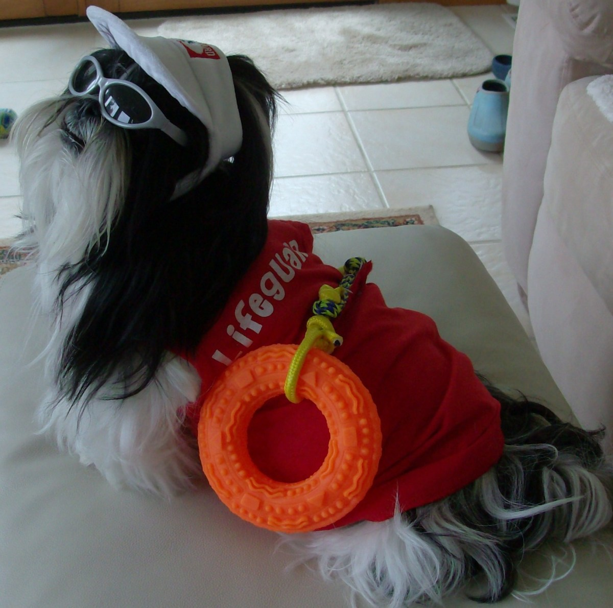 "Here is one of her Shih Tzu dogs posing as the lifeguard in the ""Baywatch Beach Crew."""