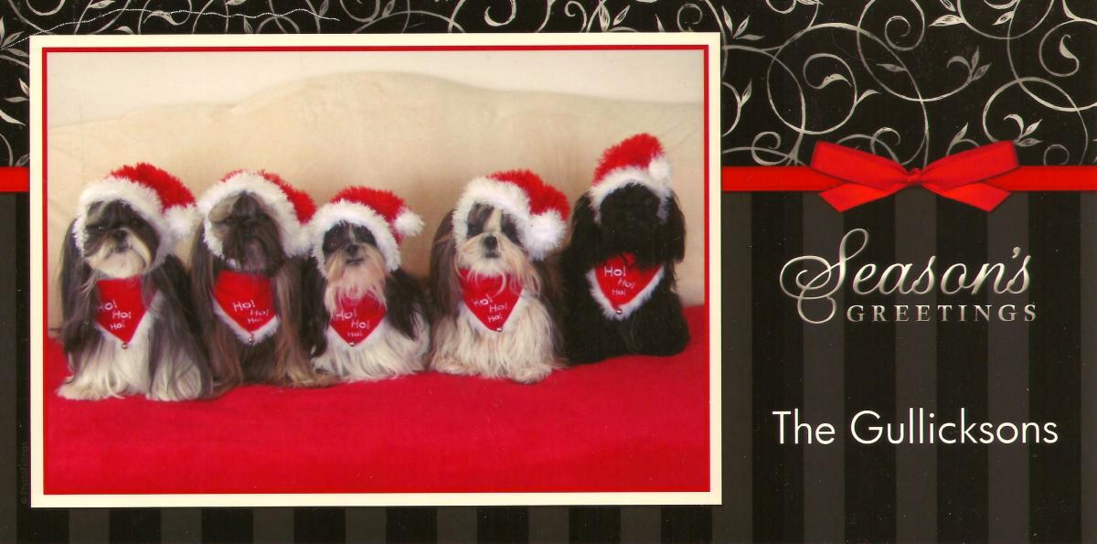 "Christmas card that we received this year.  Titled the ""Shih Tzu Christmas Gang"" this was the winning entry in the Holiday National You News Best Holiday Pet Contest!"
