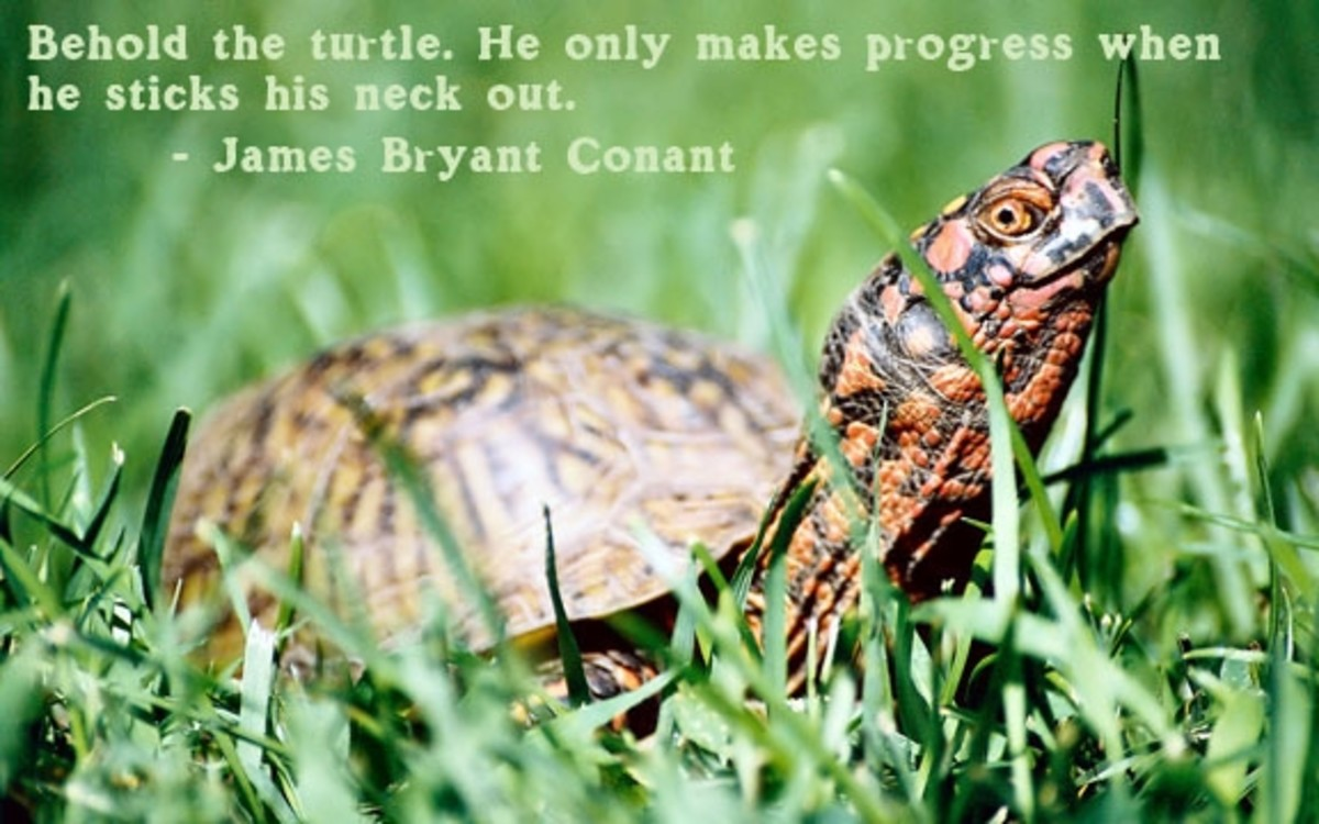 quotes-about-courage-turtle