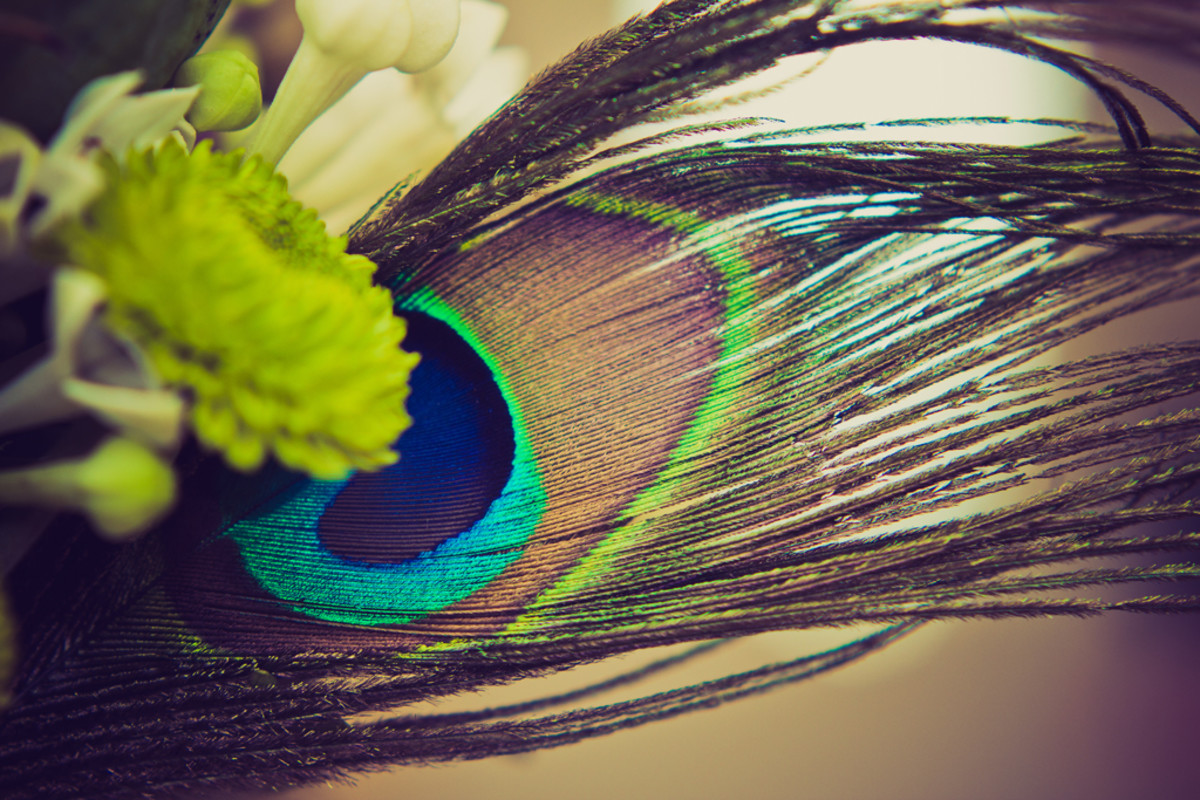 Close-up of feather in my bouquet.