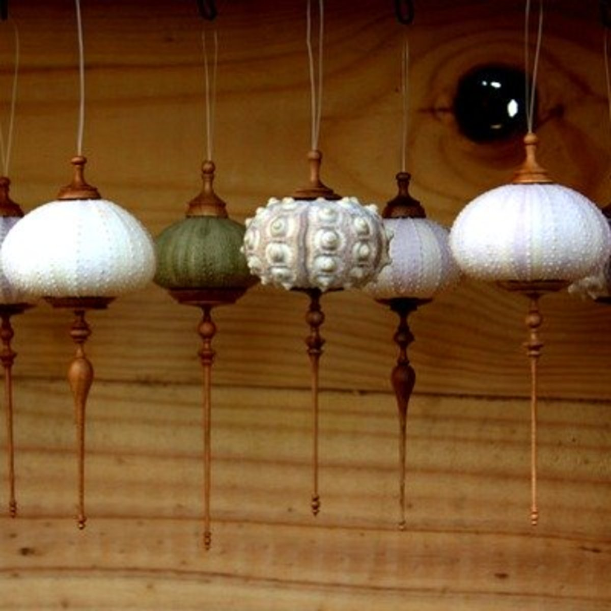 http://www.mermaidspurseseaglass.com/mermaids-purse/2010.12.18/sea-urchin-ornaments.html