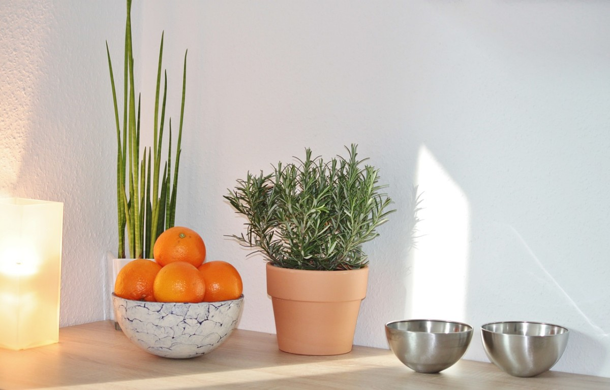 A potted herb plant such as rosemary or basil will be appreciated by anyone who loves to cook!