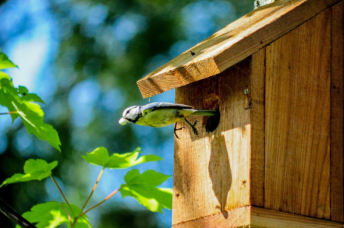 Give your lovebird a sweet little birdhouse made of wood for your fifth wedding anniversary.
