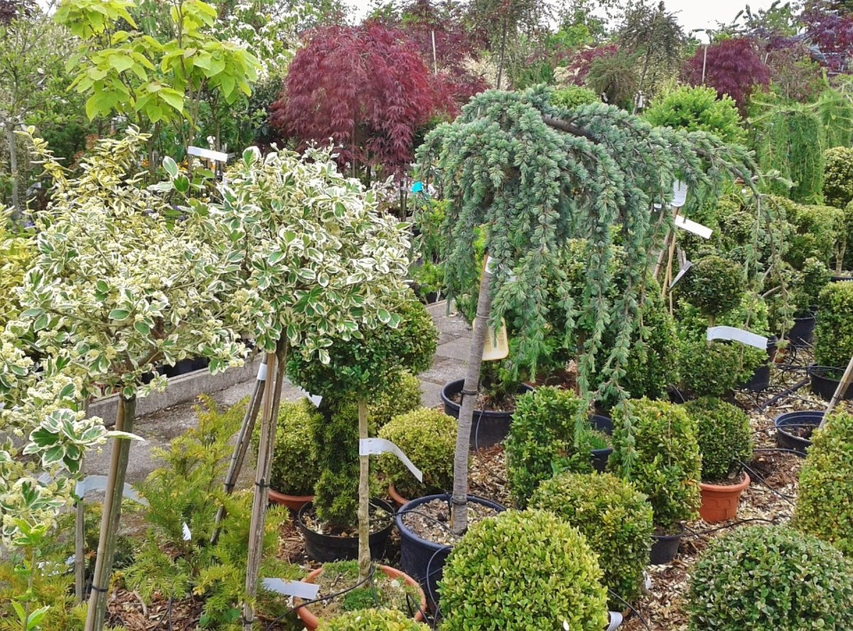 20. Potted trees at a nursery
