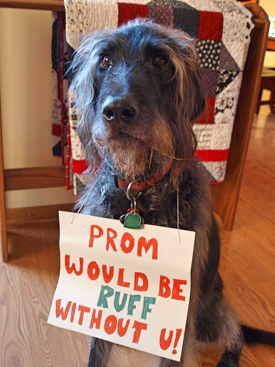 Who could say no to this cute guy?
