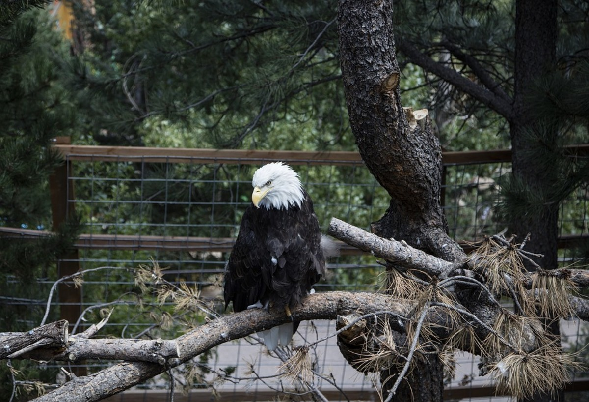 Donate your tree to a local zoo or wildlife organization to provide food or enrichment for the animals that live there.
