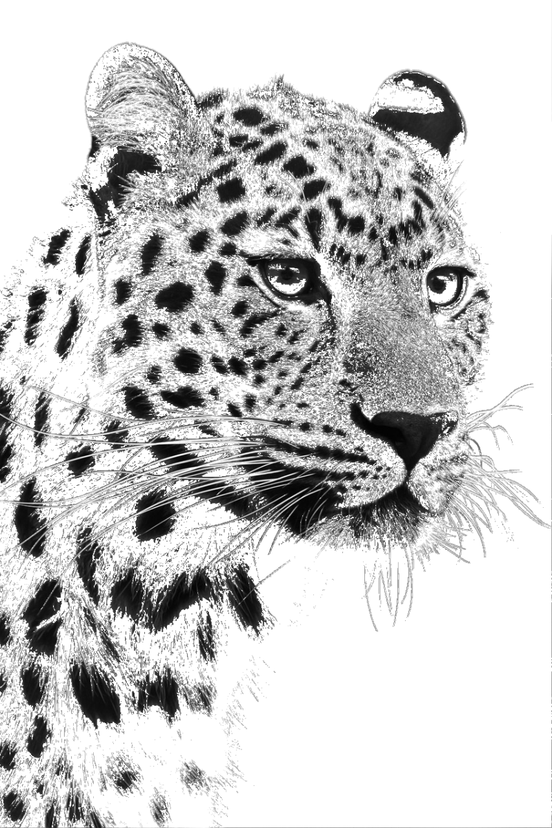 Leopard head photo to sketch using edge detection.