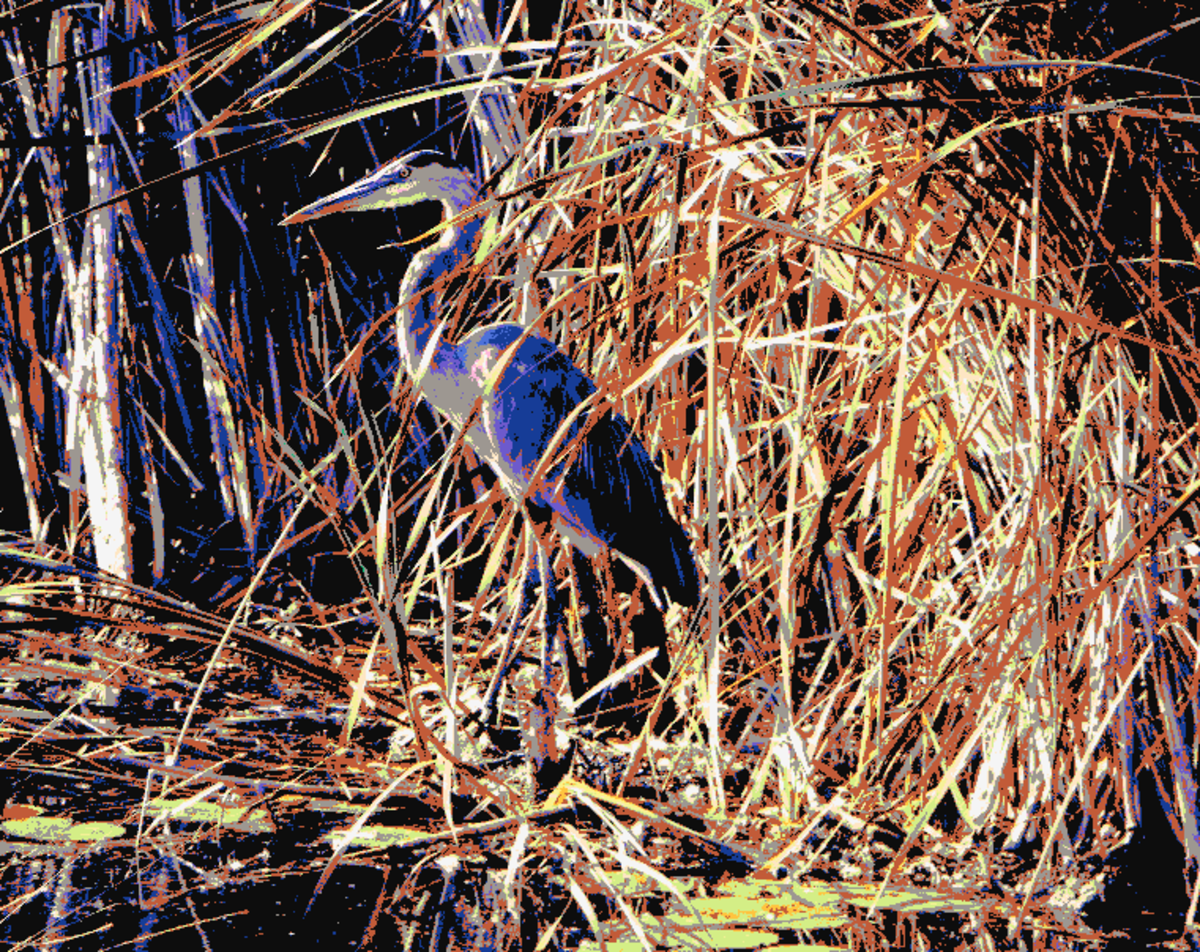 Great blue heron with crayon colors.