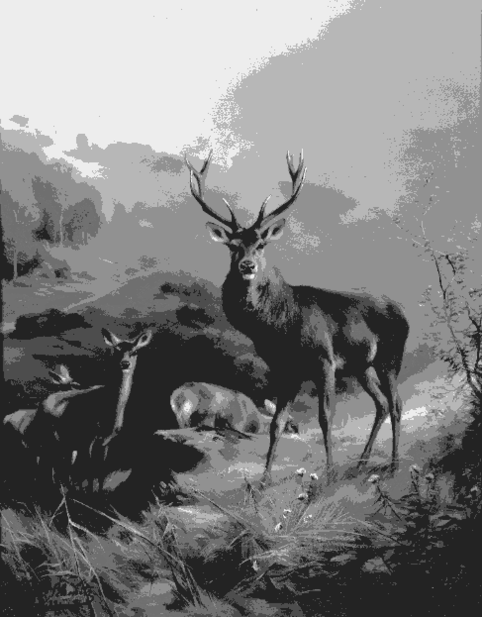 Deer painting that was changed to make it look like a drawing.