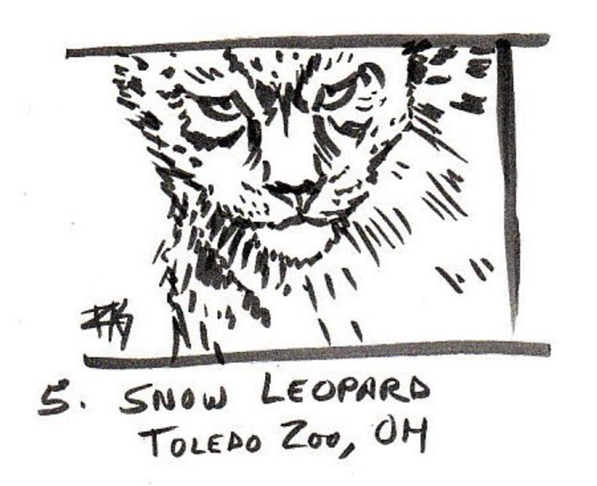 "Snow Leopard, 3"" x 4"" in Pitt Artist Pens on sketchbook paper by Robert A. Sloan"