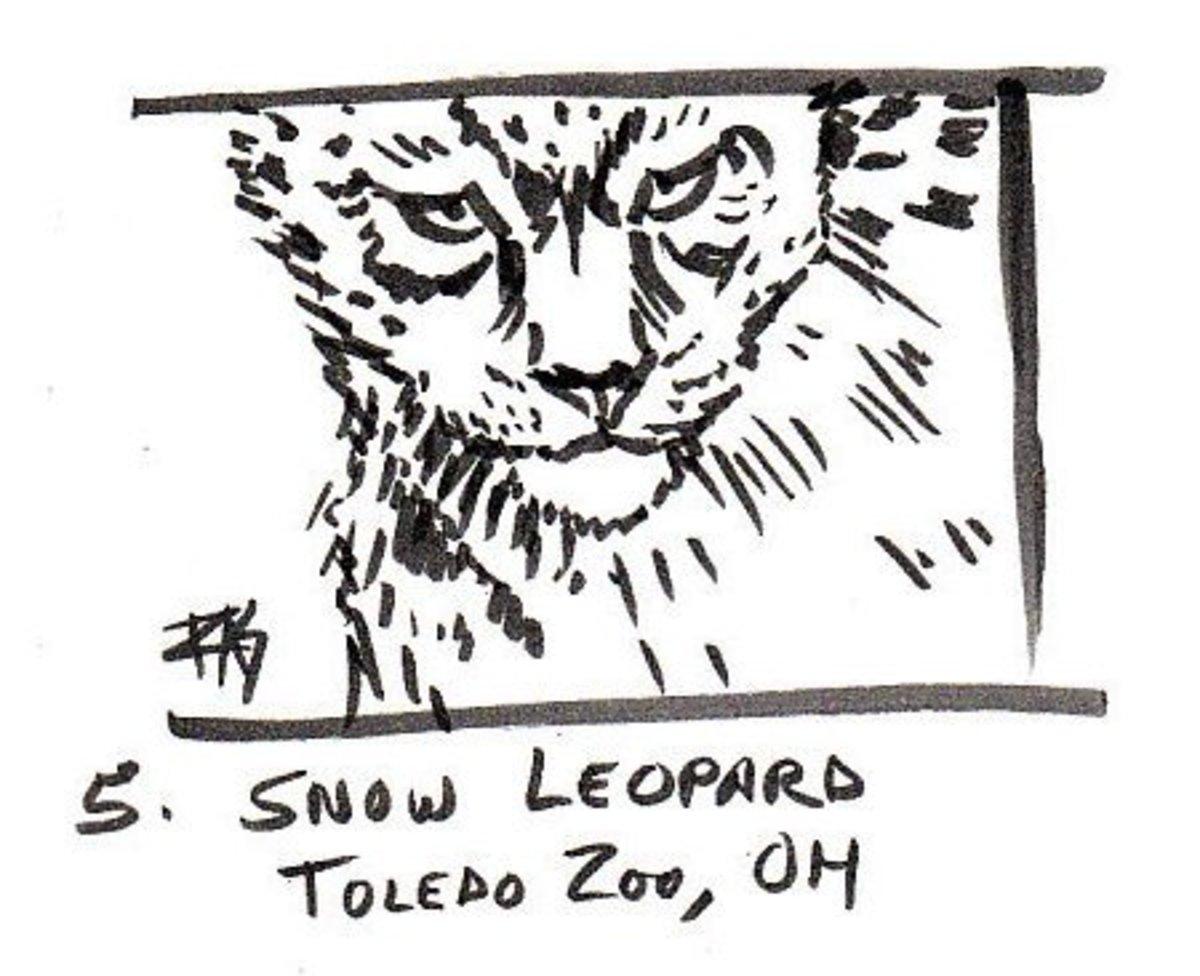 "Snow Leopard, 3"" x 4"" in Pitt Artist Pens on sketchbook paper by Robert A. Sloan"