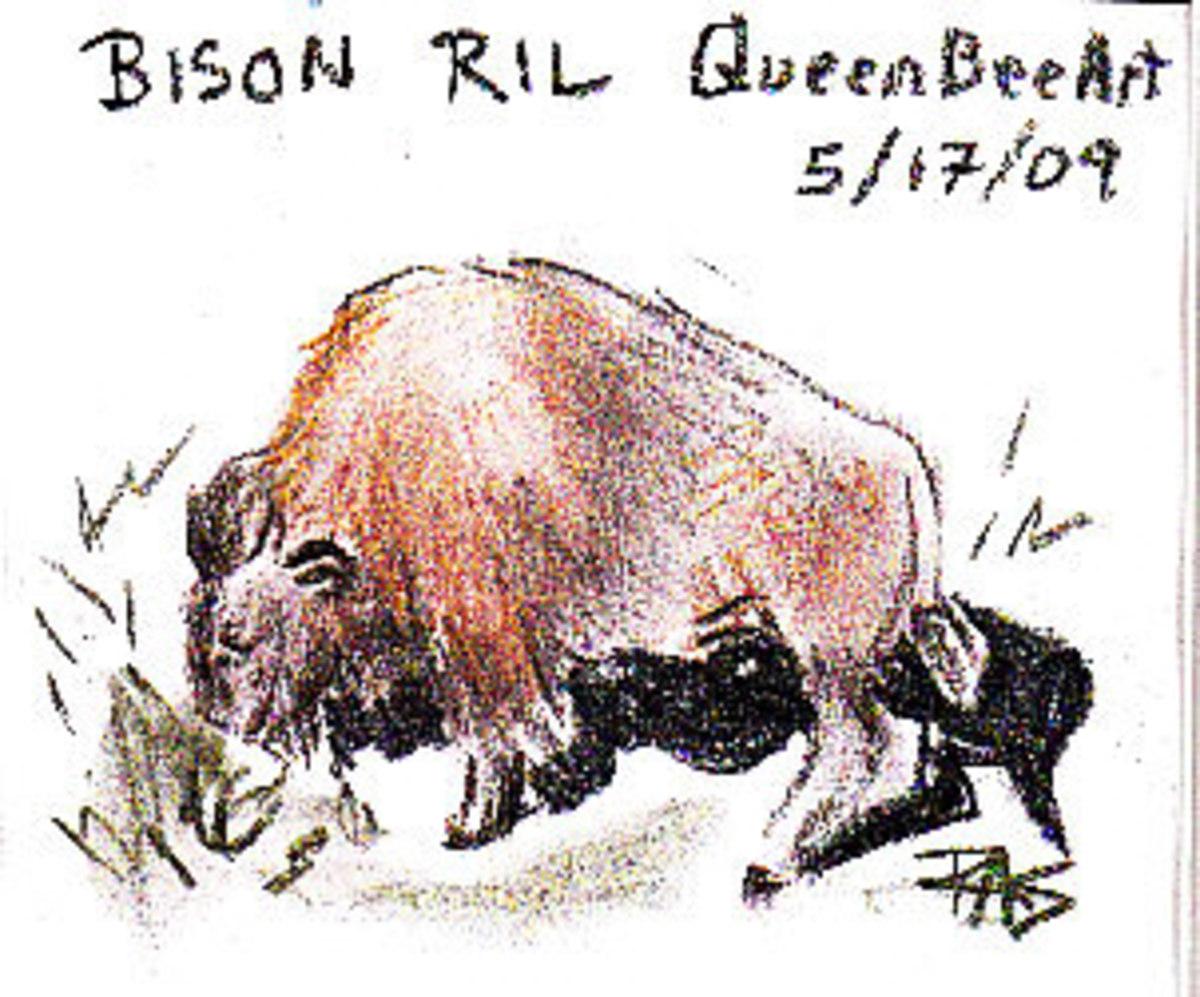 Bison, Derwent Tinted Charcoal Pencil on sketchbook paper. Robert A. Sloan