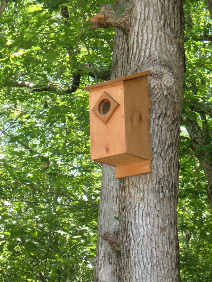 This Screech Owl Nesting Box Is Ready For Occupancy