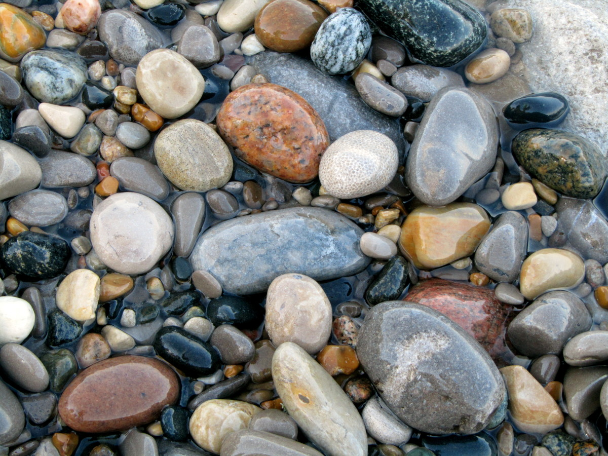seashells and stones on the seashore are cheap and plentiful