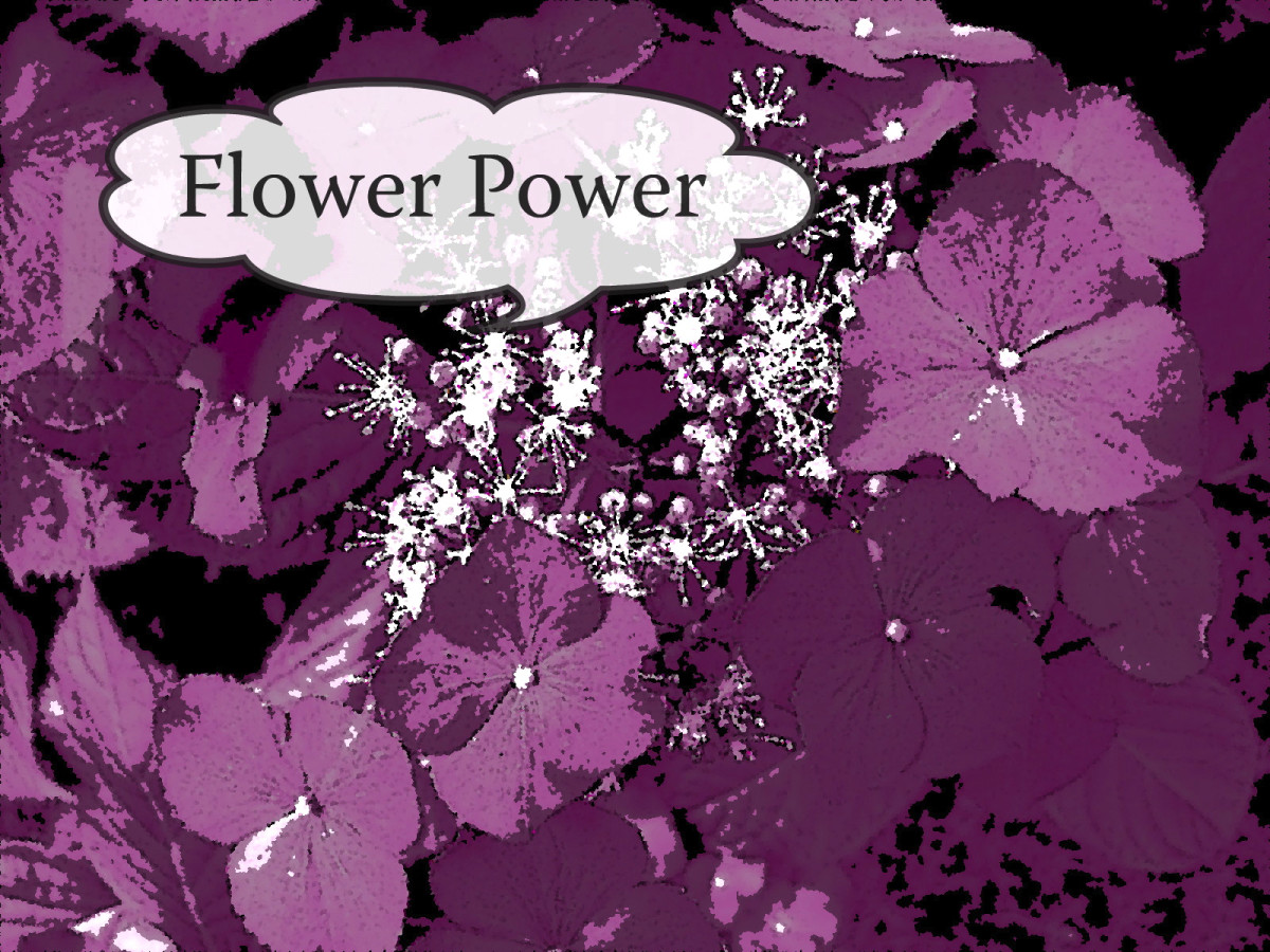 An abstract version of my flower photo that was created in the previous version of the online editor