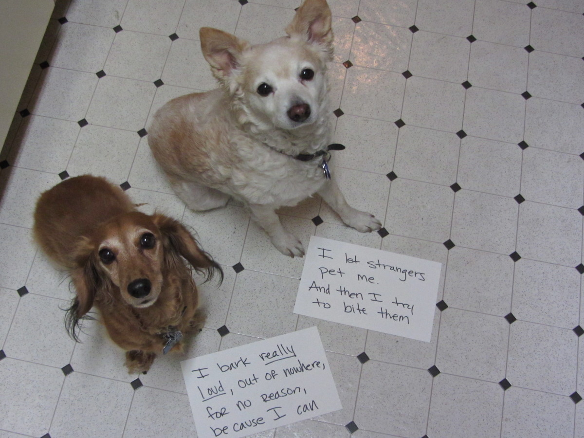 Dog shaming has been a very popular meme among animal owners.