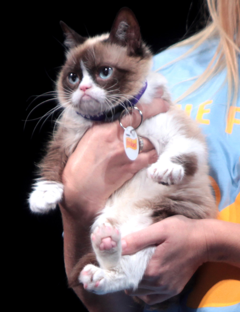 If you are lucky you will have a meme that will make you rich.  Grumpy Cat is one of the small few that has made money due to the popularity of the Grumpy Cat memes.  Unfortunately, Grumpy Cat died in 2019.