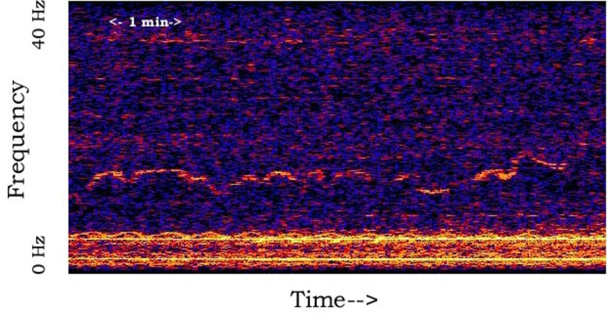 "A spectrogram of the mysterious ""Whistle,"" which was recorded on a single hydrophone in 1997."