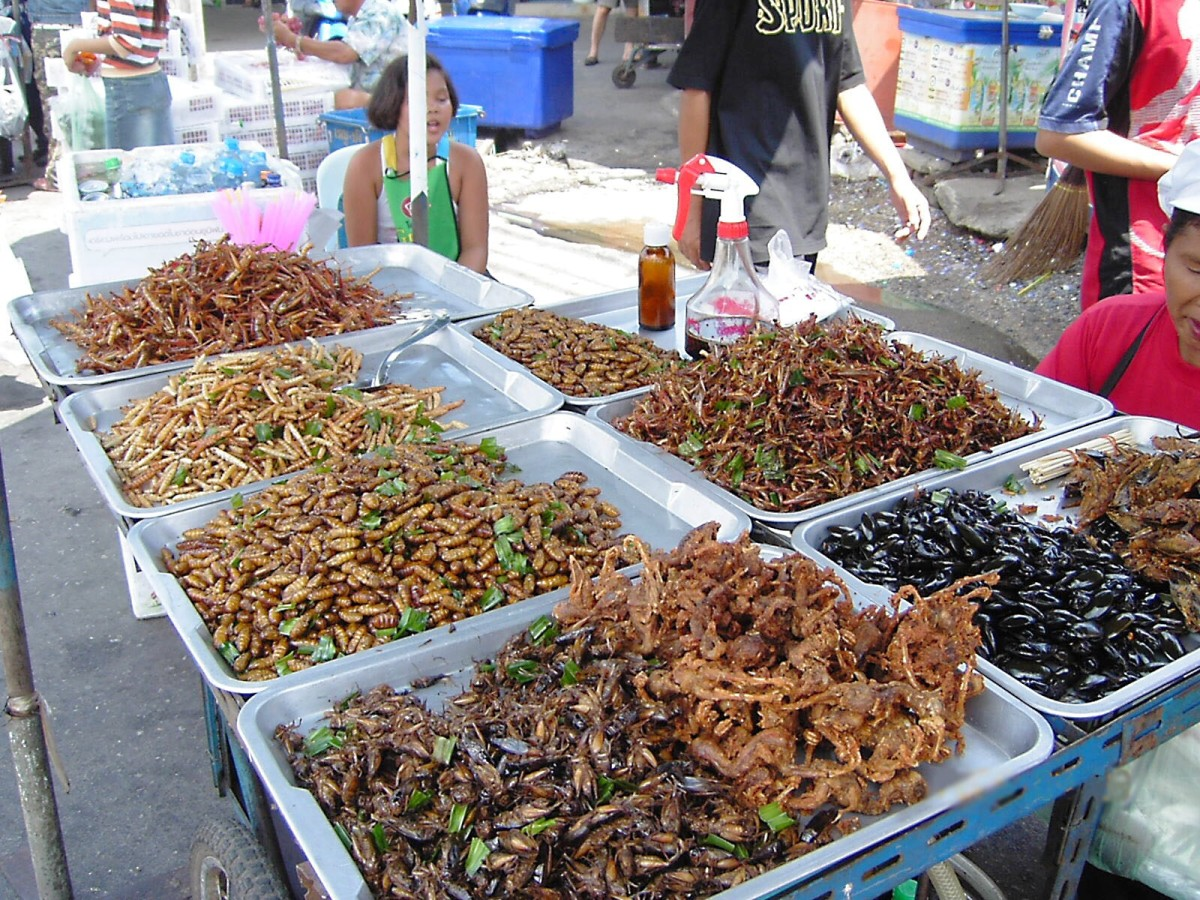 Some people enjoy eating insects. These are deep fried. Dried and powdered insects may one day be added to a liquid to make a medium for a food printer.