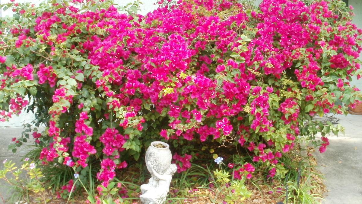 Surveying my garden