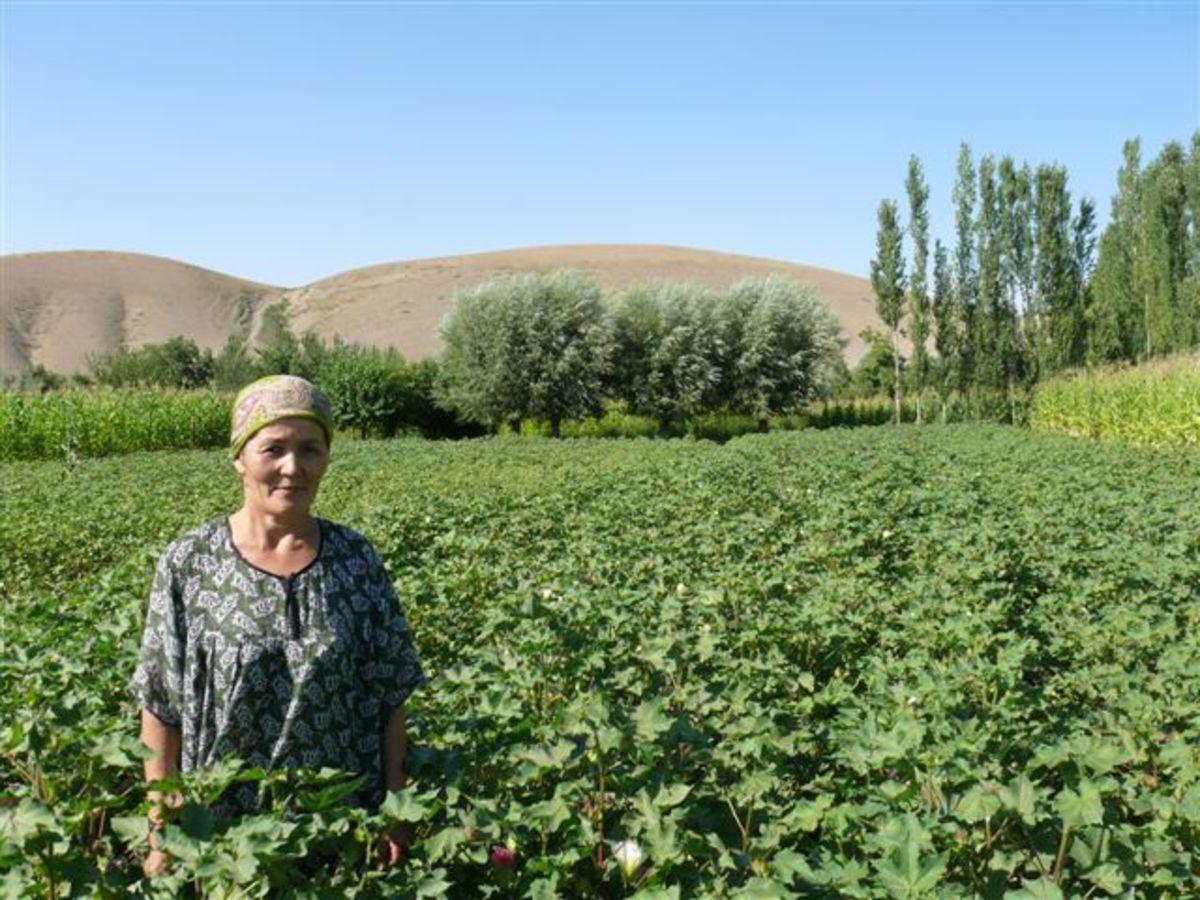 This farmer grows organic cotton in Kyrgyzstan.