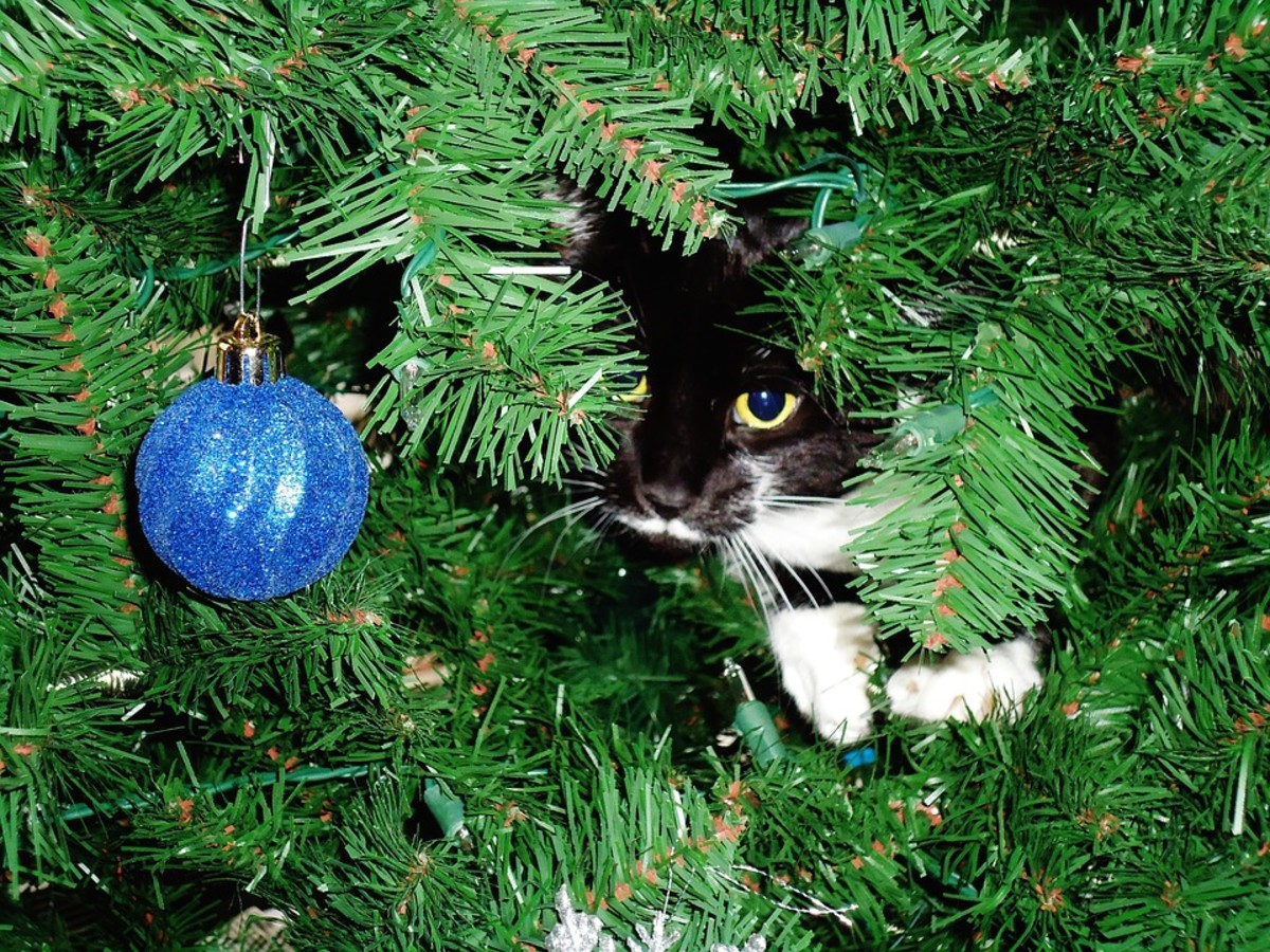 Super cute and better than a fake ornament.