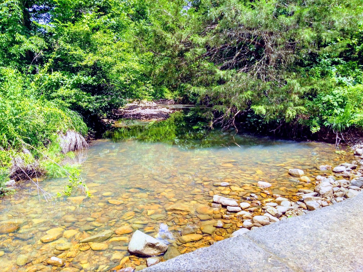 A shot I captured with my Pixel by the low water creek near my house. The Pixel excels at capturing shots like this.