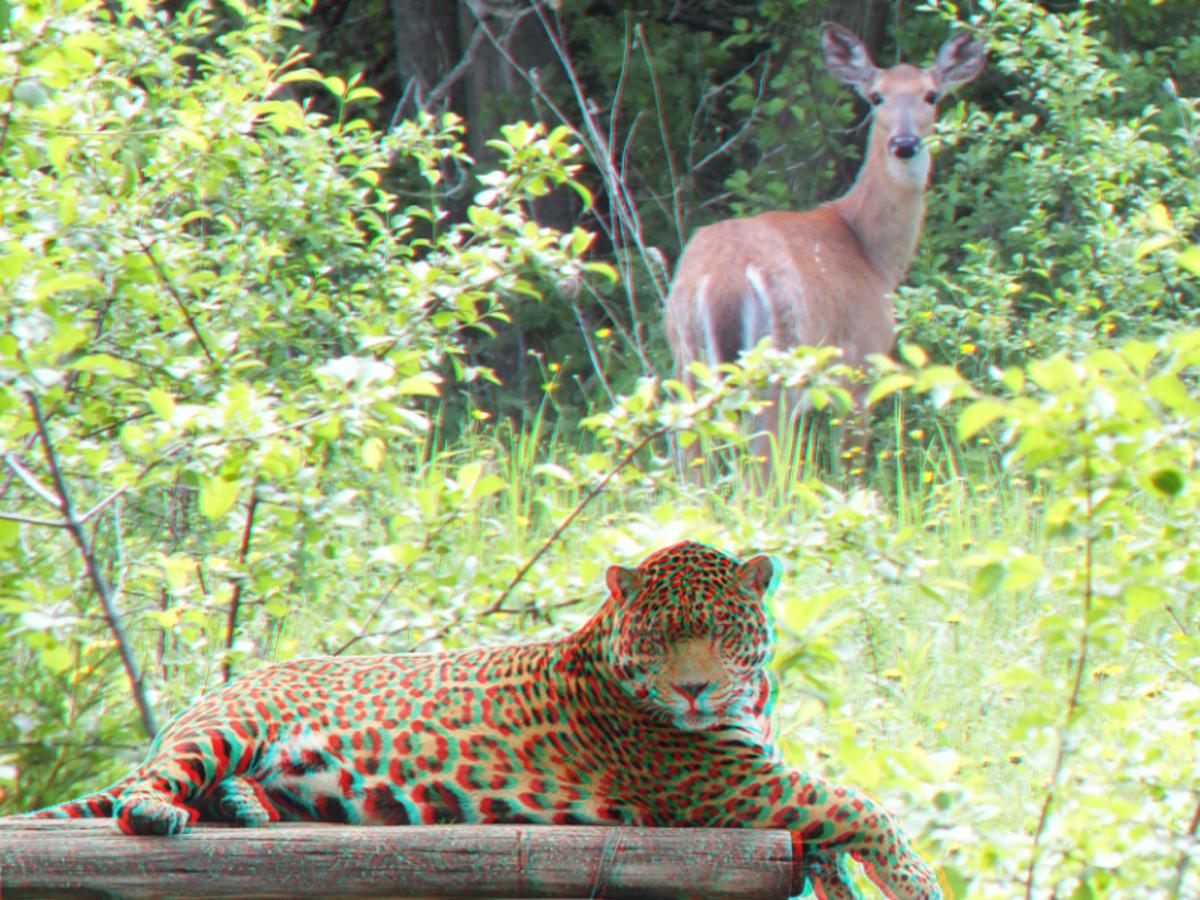 Cardboard cutout effect of a leopard in a deer photo.
