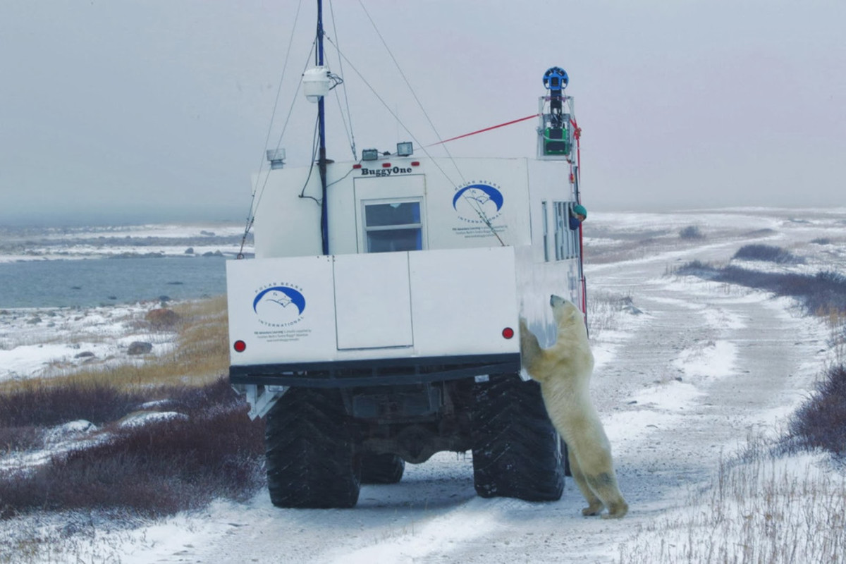Google Trekker Exploring- with Polar Bear