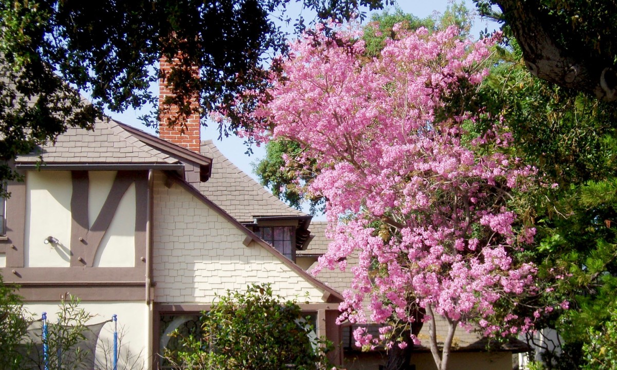 I happen to like peaked roofs and flowering trees. So this is a photo I might use to motivate myself to buy a house, if I wanted one.
