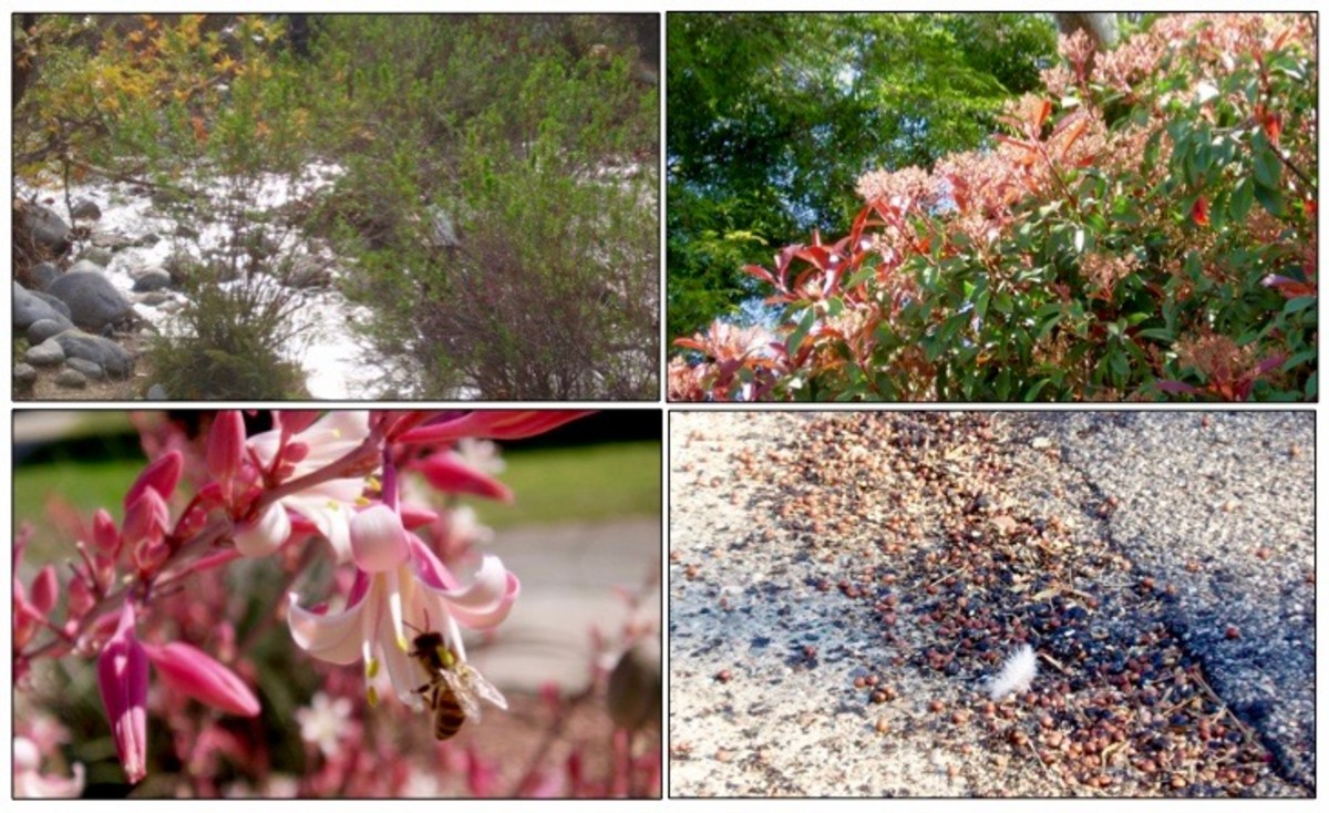 Living in Southern California, I choose different photos for the seasons than would someone living in a four season climate. For me winter is about rain, spring is blooming of bushes and trees, summer is flowers and bees, fall is seeds and leaves.