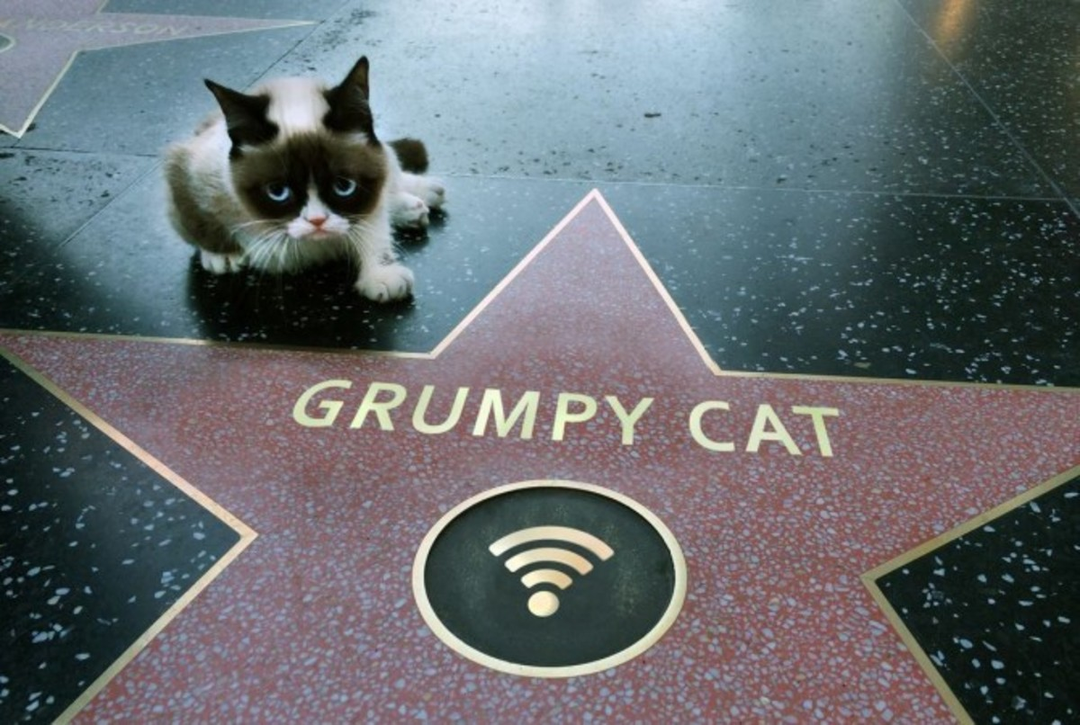 Grumpy Cat with her star on Hollywood Walk of Fame