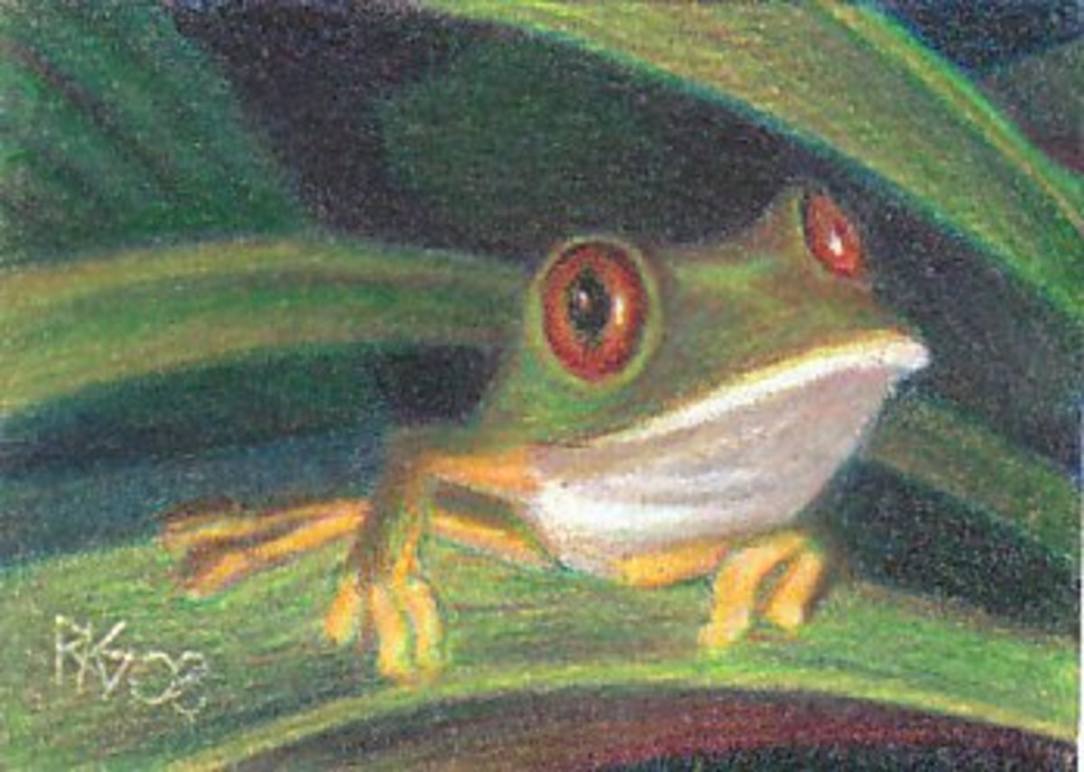 Tree Frog by Robert A. Sloan, Prismacolor Realism