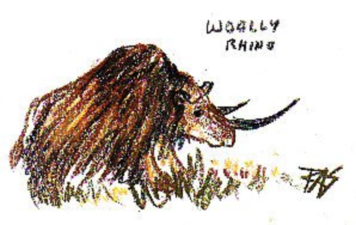 Woolly Rhino 1 by Robert A. Sloan, Derwent Drawing Pencils on Paper. Don't copy this, it's not even accurate.