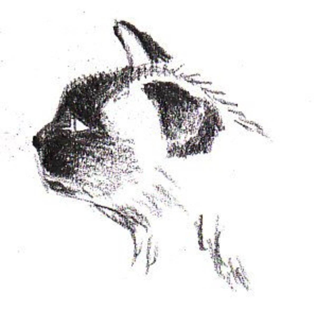 Shading the Mask and Ears for your Siamese Cat.