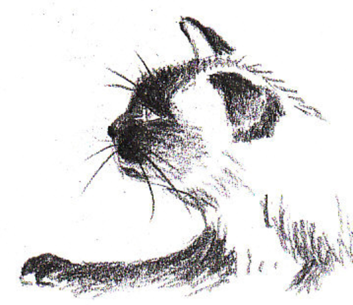 Finished Siamese Cat Profile by Robert A. Sloan