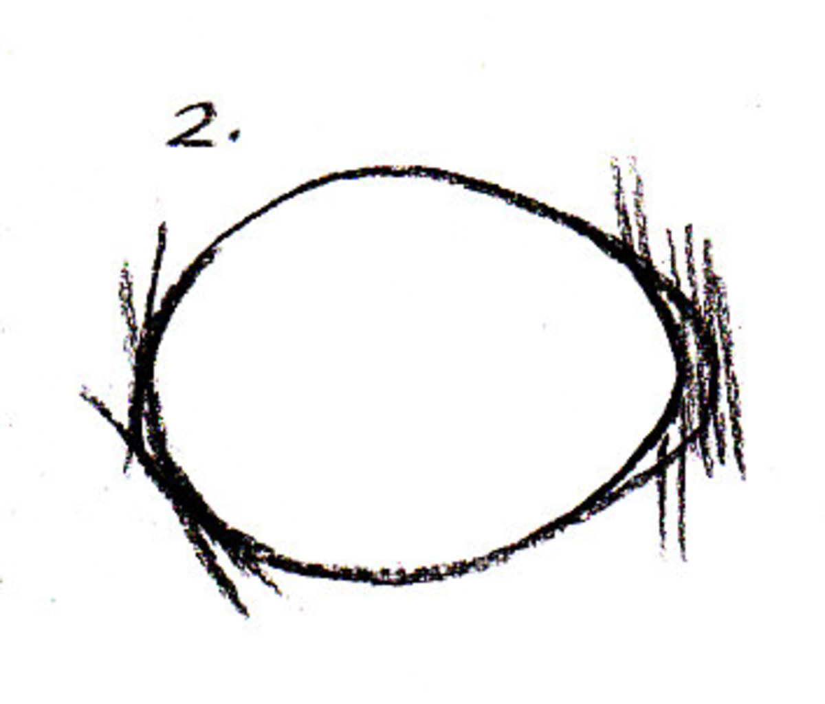 Egg sketched from life by Robert A. Sloan