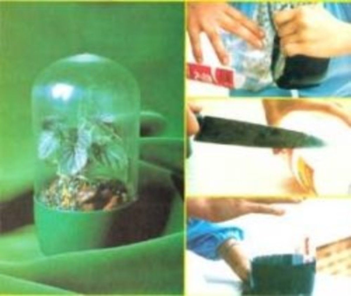 A Terrarium Made From a Plastic Bottle
