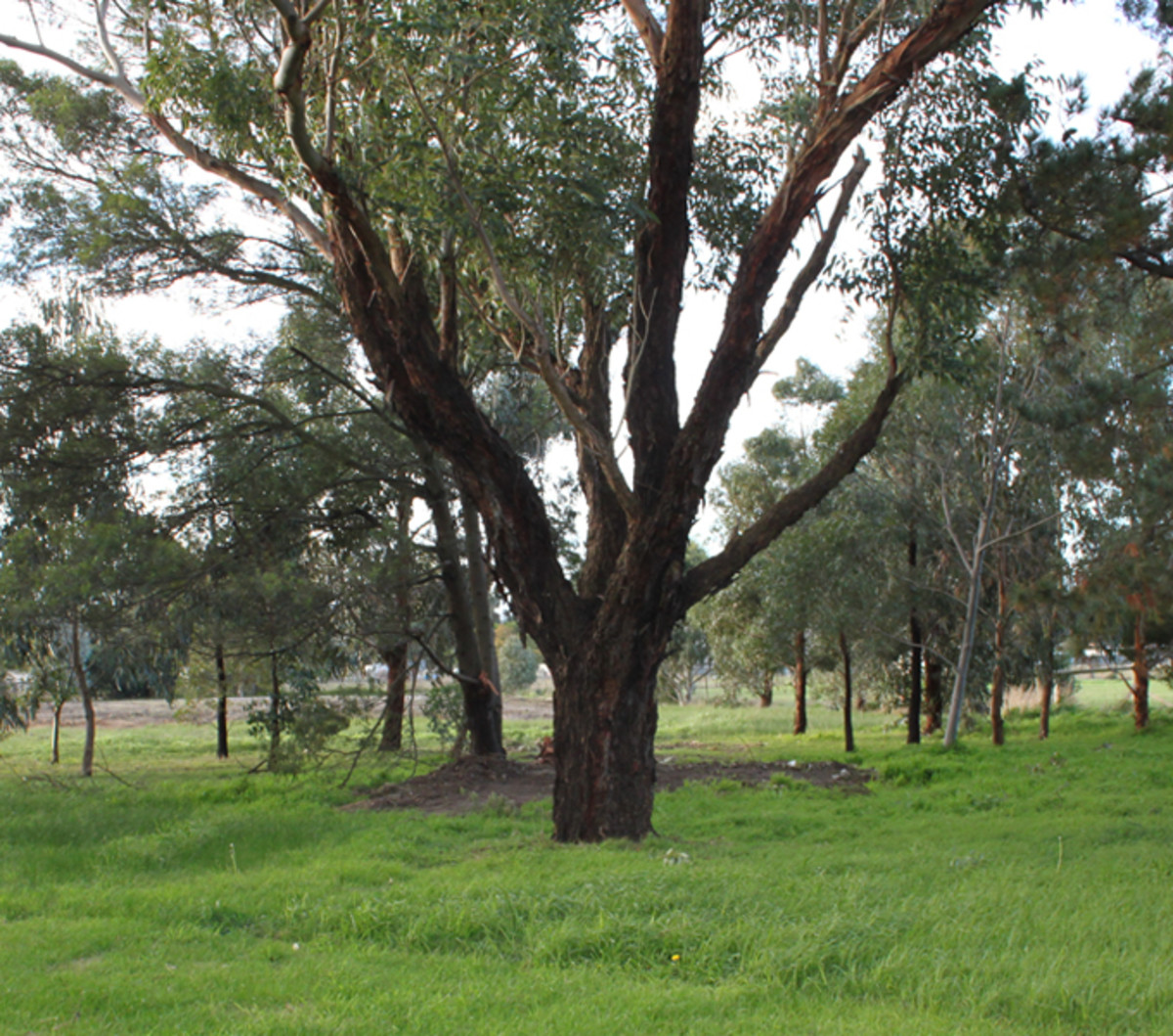 Image taken with the 18-55mm lens set at 18mm (min), from the same place as the tree image below.