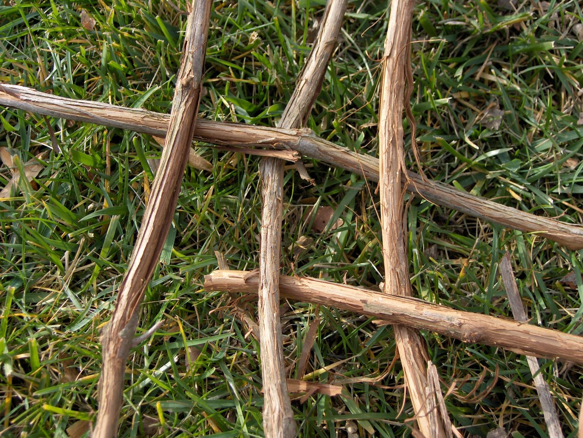 WEAVE FIRST SIX STEMS ACROSS OVER AND UNDER