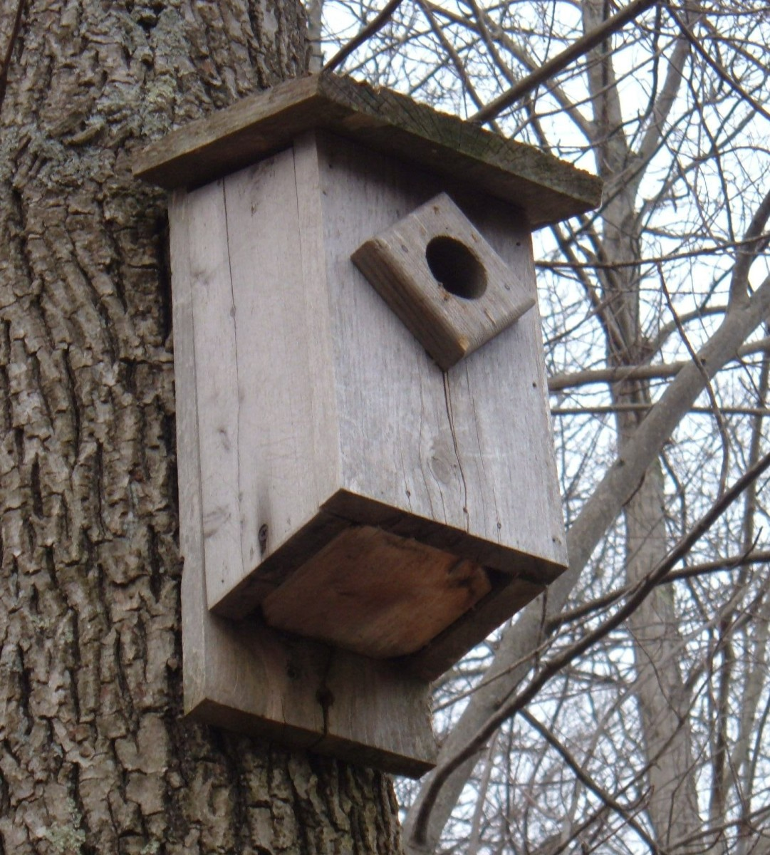 I made this bluebird house several years ago. The pine was left natural and has weathered to silvery-gray color.