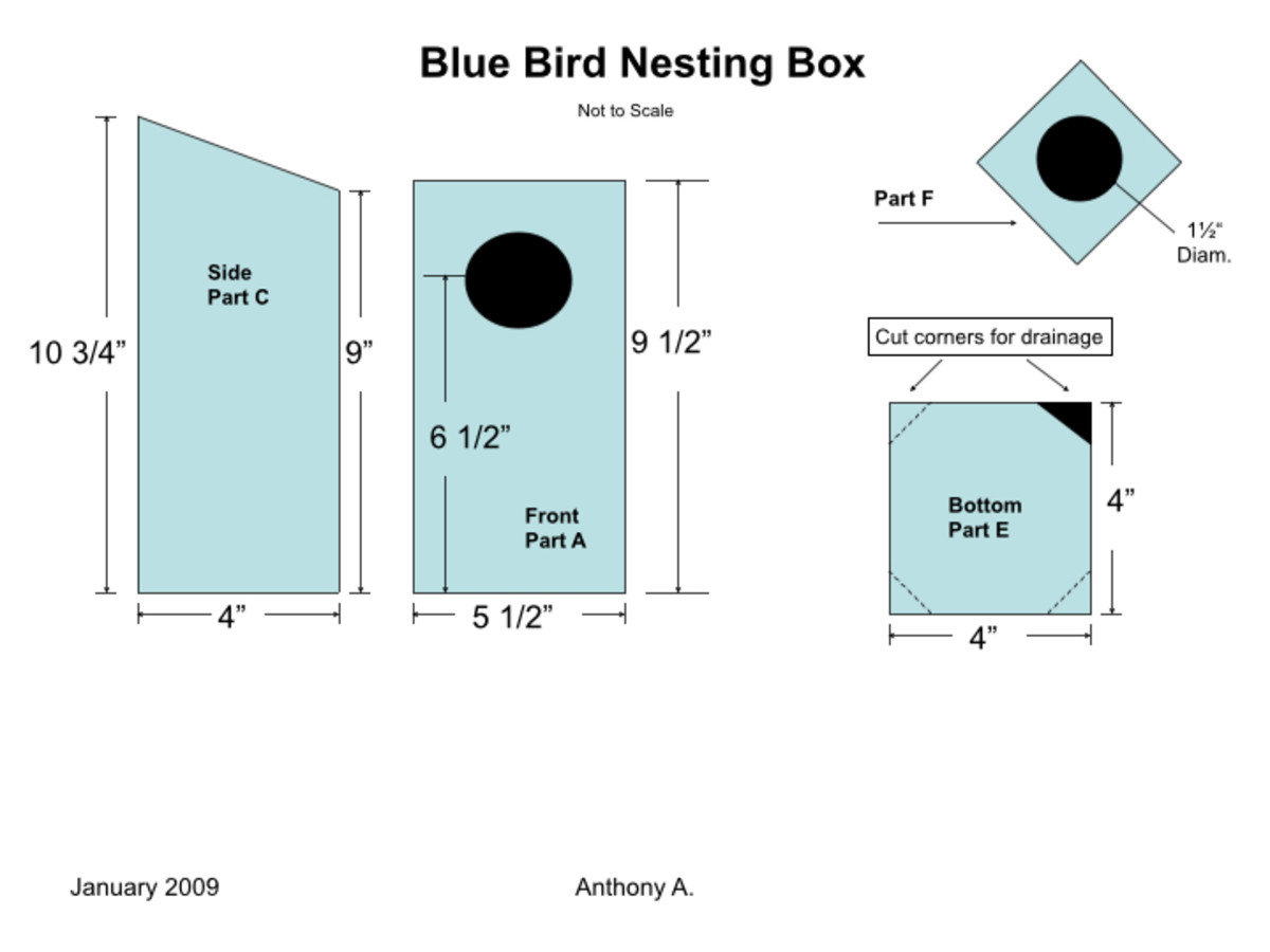 How to Build a Bluebird House: Nest Box Plans | FeltMagnet
