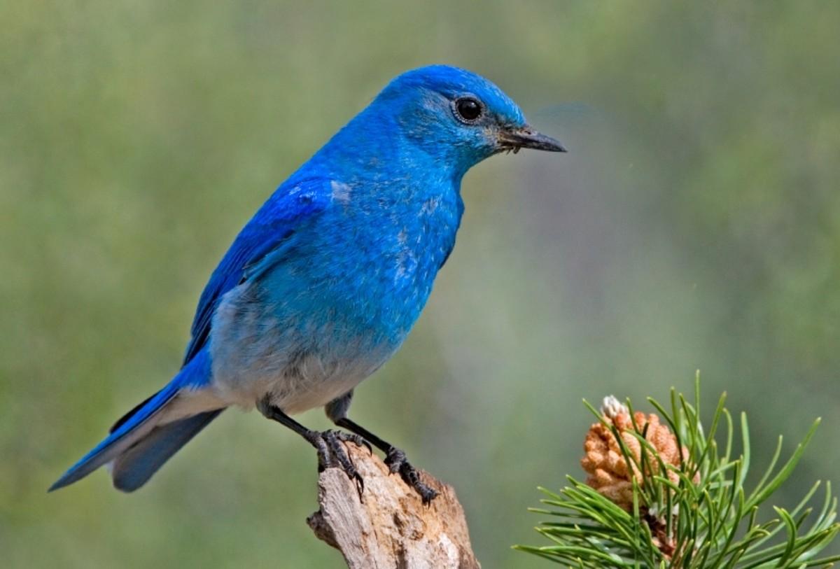 a-bluebird-house-for-the-garden