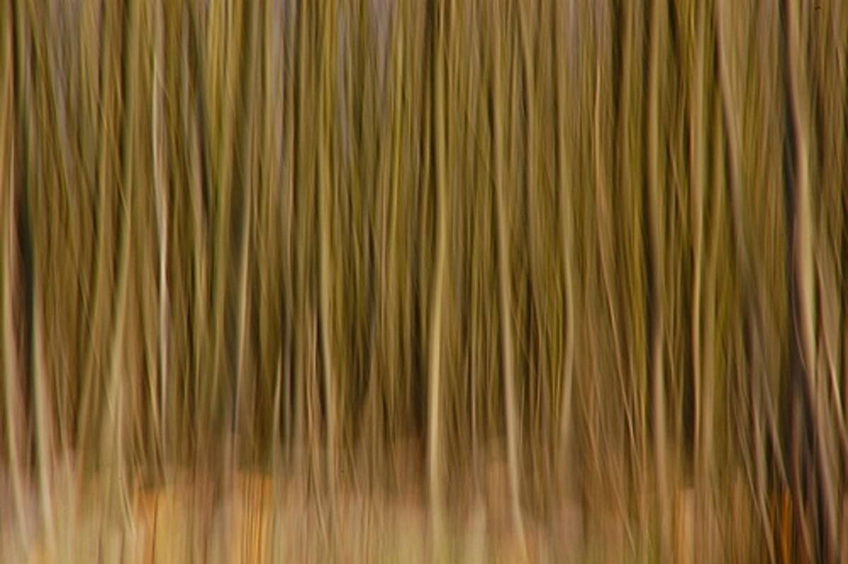 Slow shutter speed effect: move the camera up or down