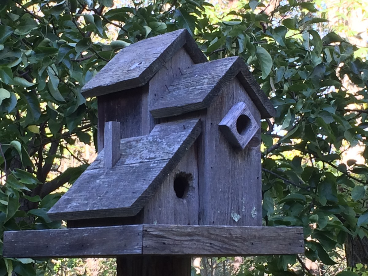 Made of pine, this birdhouse has weathered to a silvery-gray