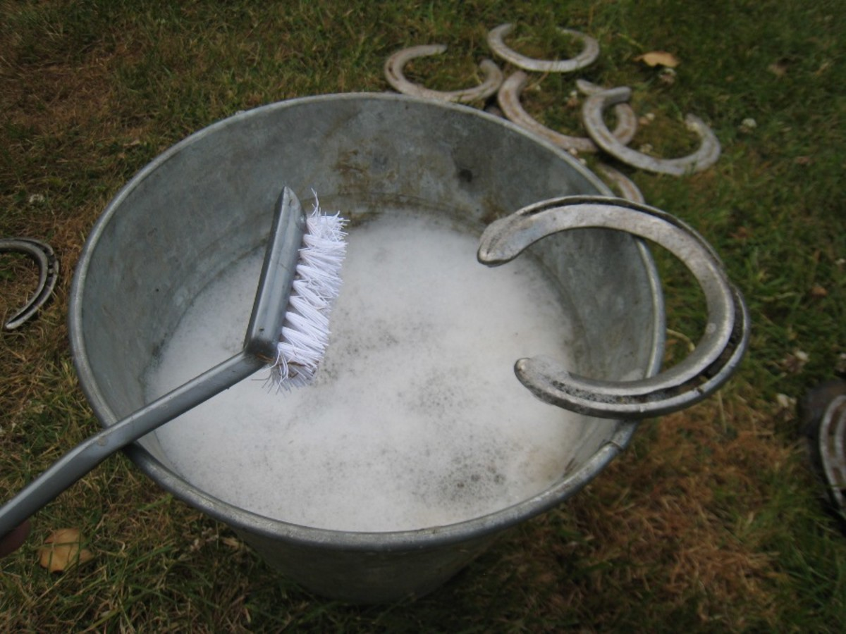 Cleaning: Brush the shoe to remove loose pieces of dirt