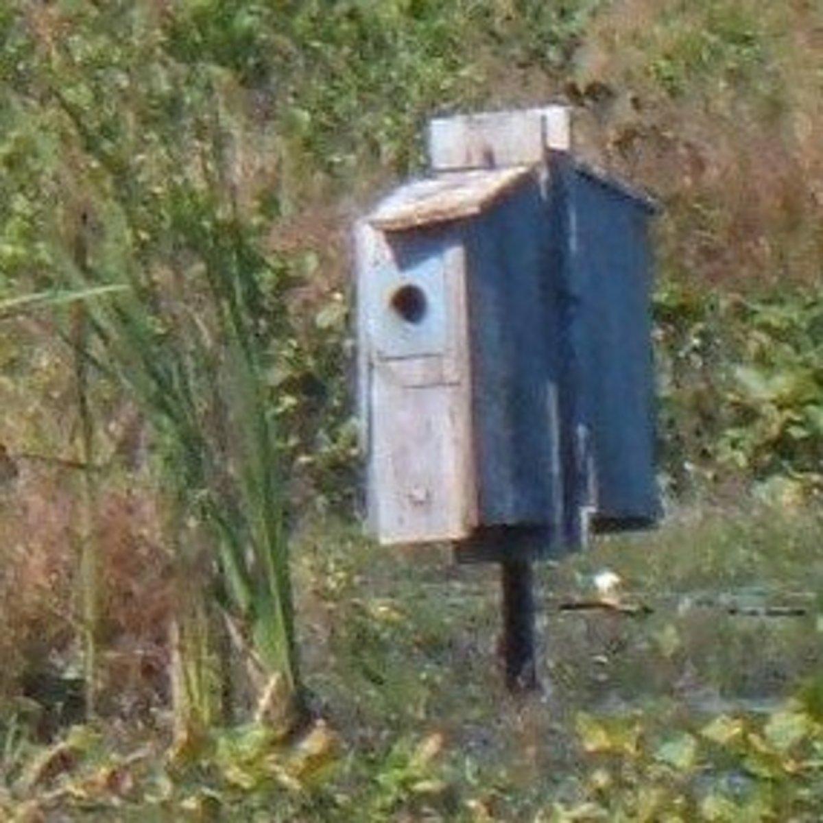 Wood Duck Nest Box Plans