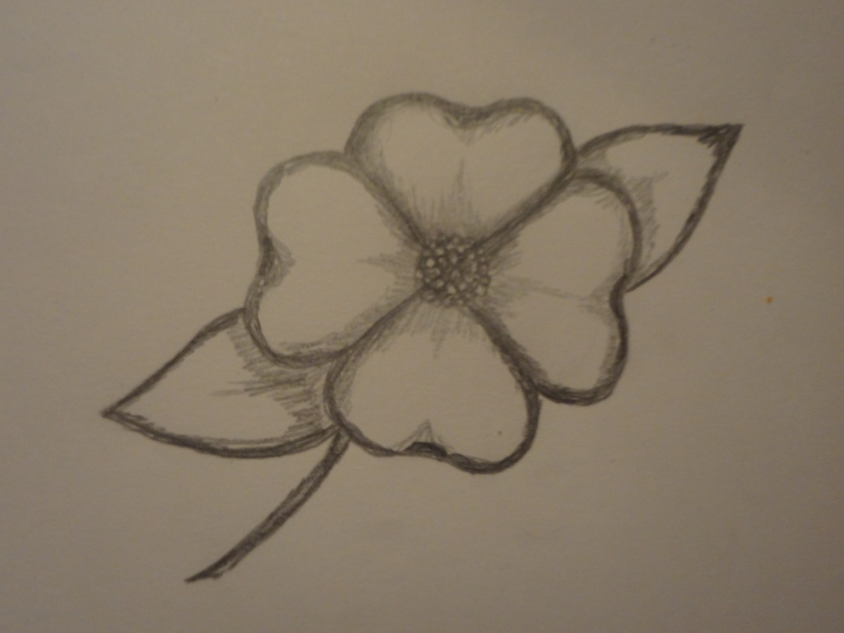 Dogwood Flower Line Drawing : How to draw a dogwood flower feltmagnet
