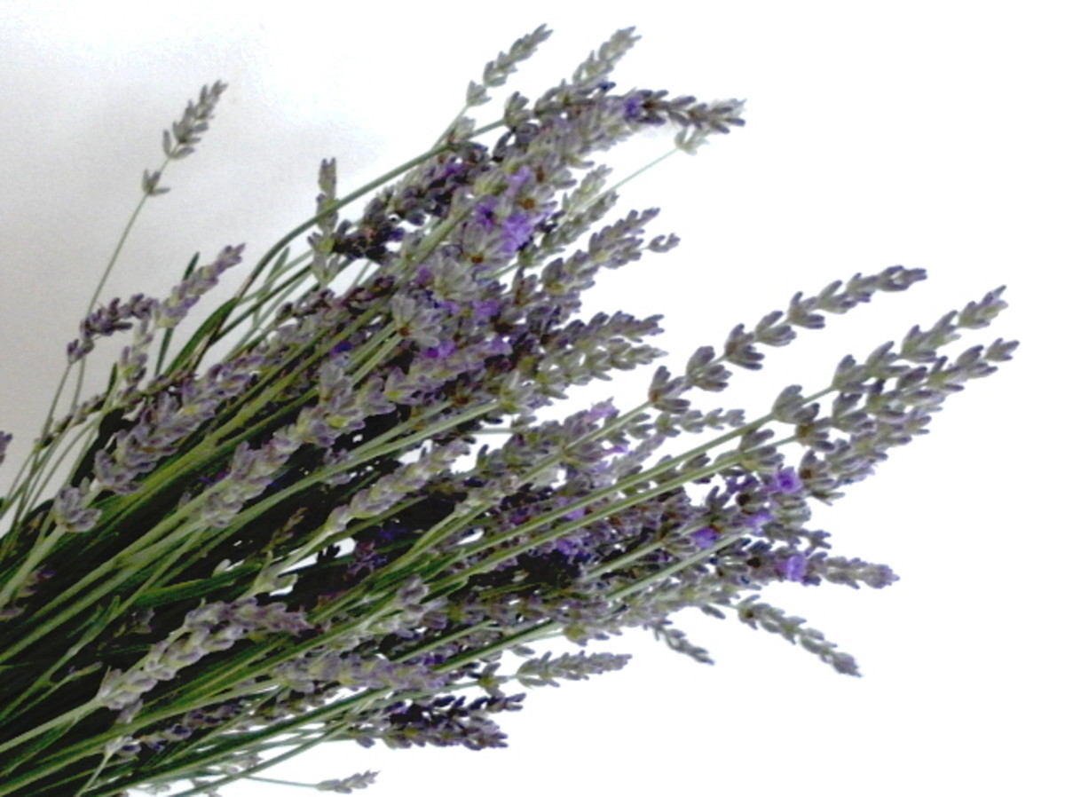 A bunch of lavender flowers.