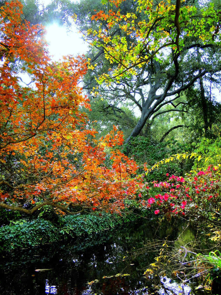 A Walk in the Woodlands: My Photographic Journal